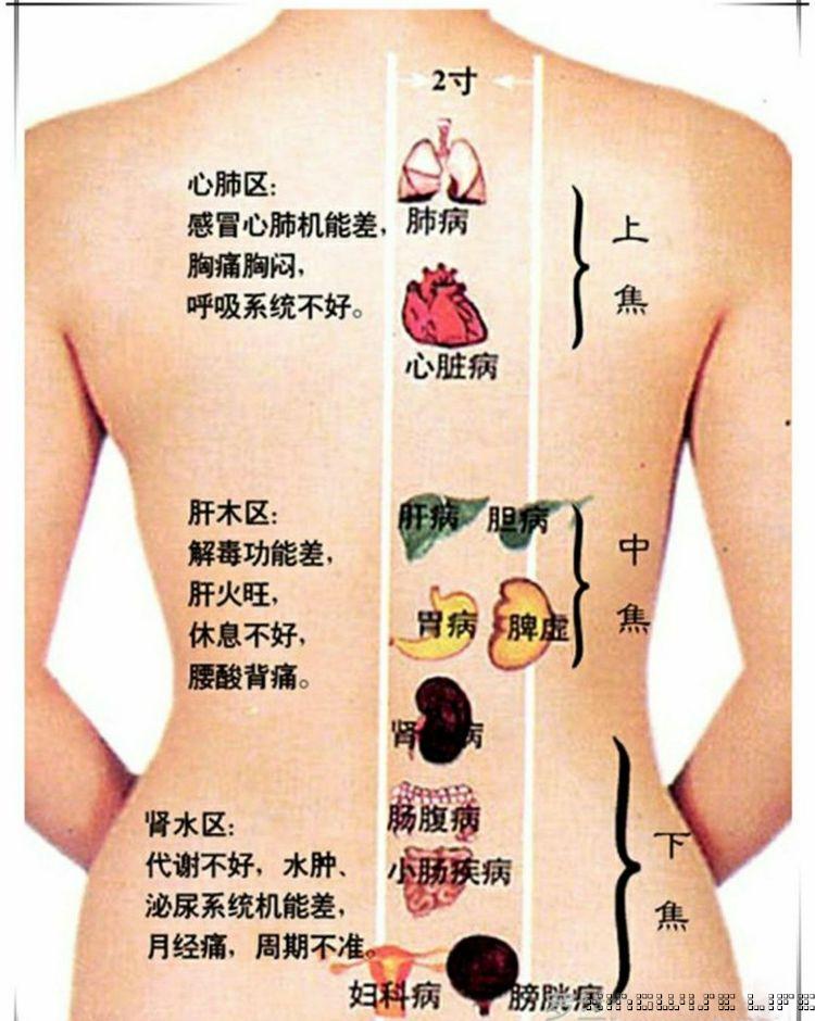 背部经络的重要性